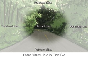 visual field of the eye